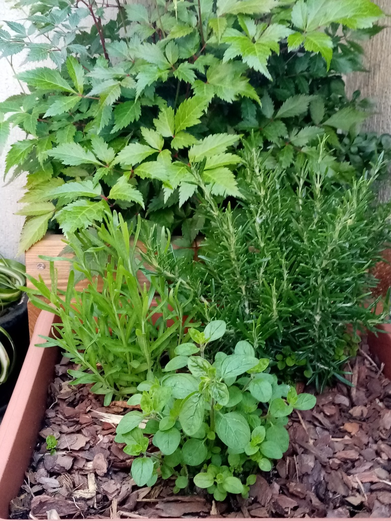 Herb plants in a pot on a balcony