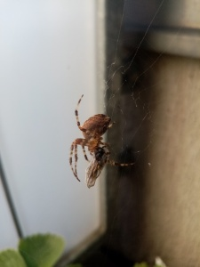 Spider in a net catching an insect