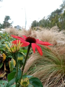 red flower on a background of grass and greens