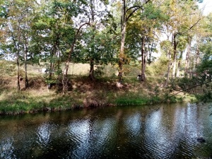 river, trees on the other bank