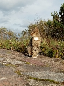 a cat siting with eyes closed on asphalt with green grass on a background