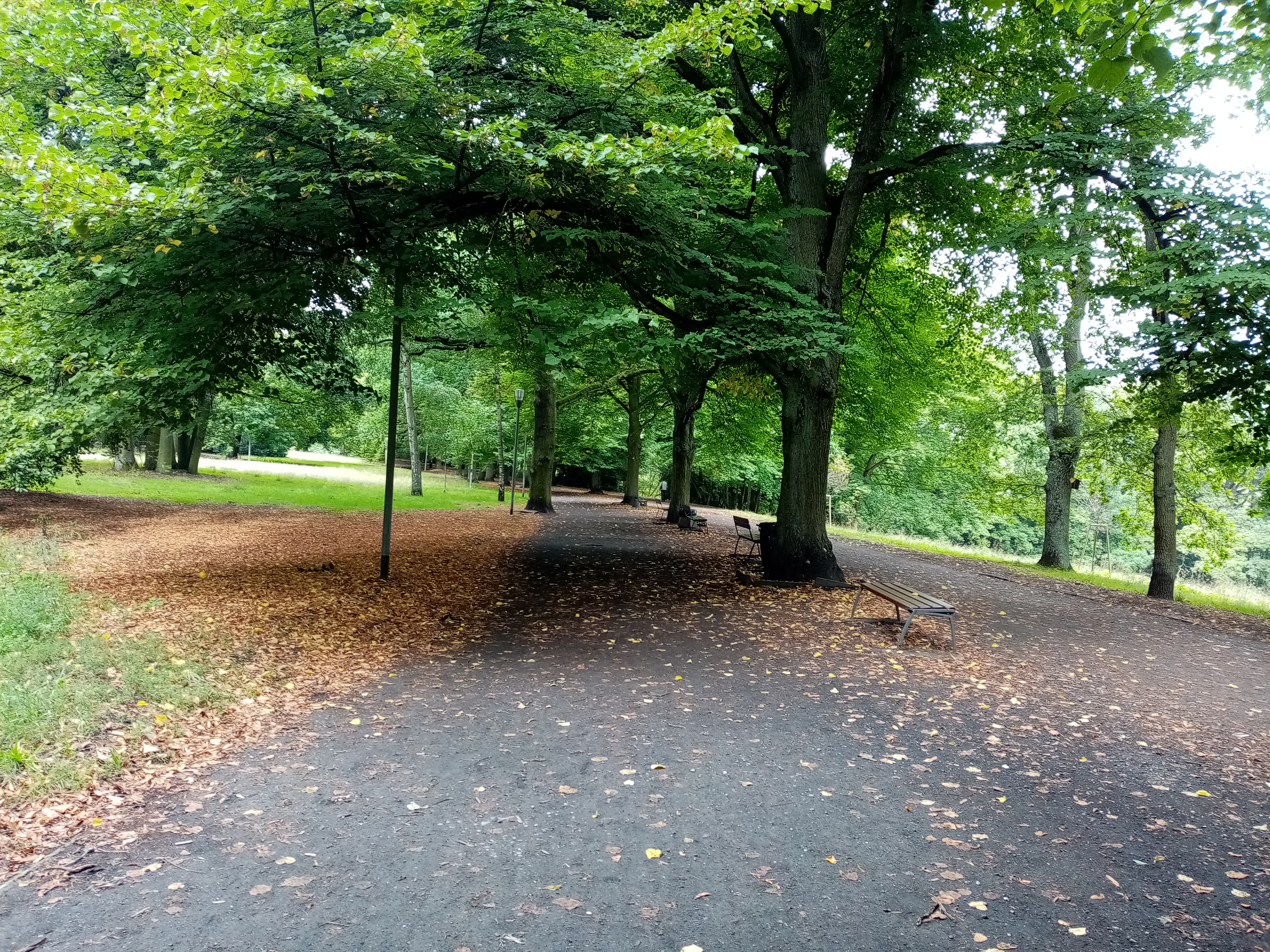 the road with fallen leaves aside and green trees