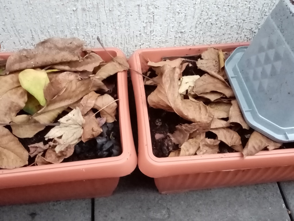 balcony pots with soil with leaves on the top