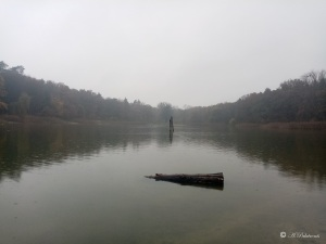 lake surrounded by trees in misty sky